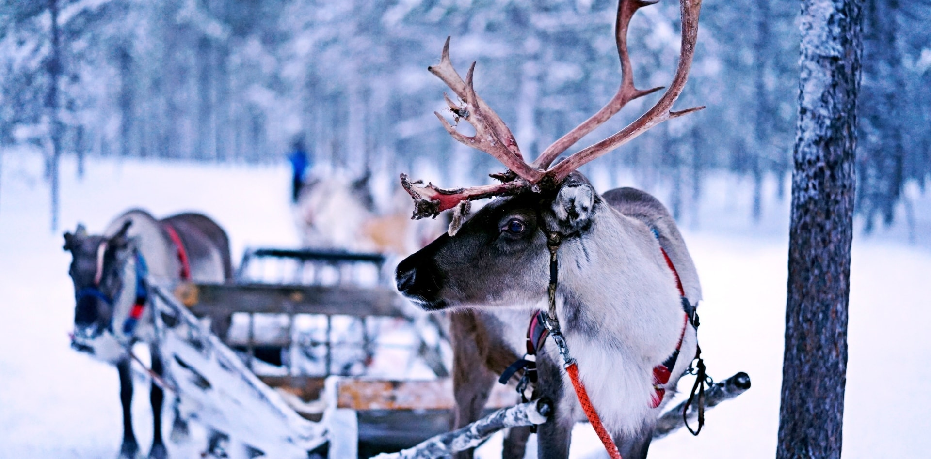 Build your trip in Lapland