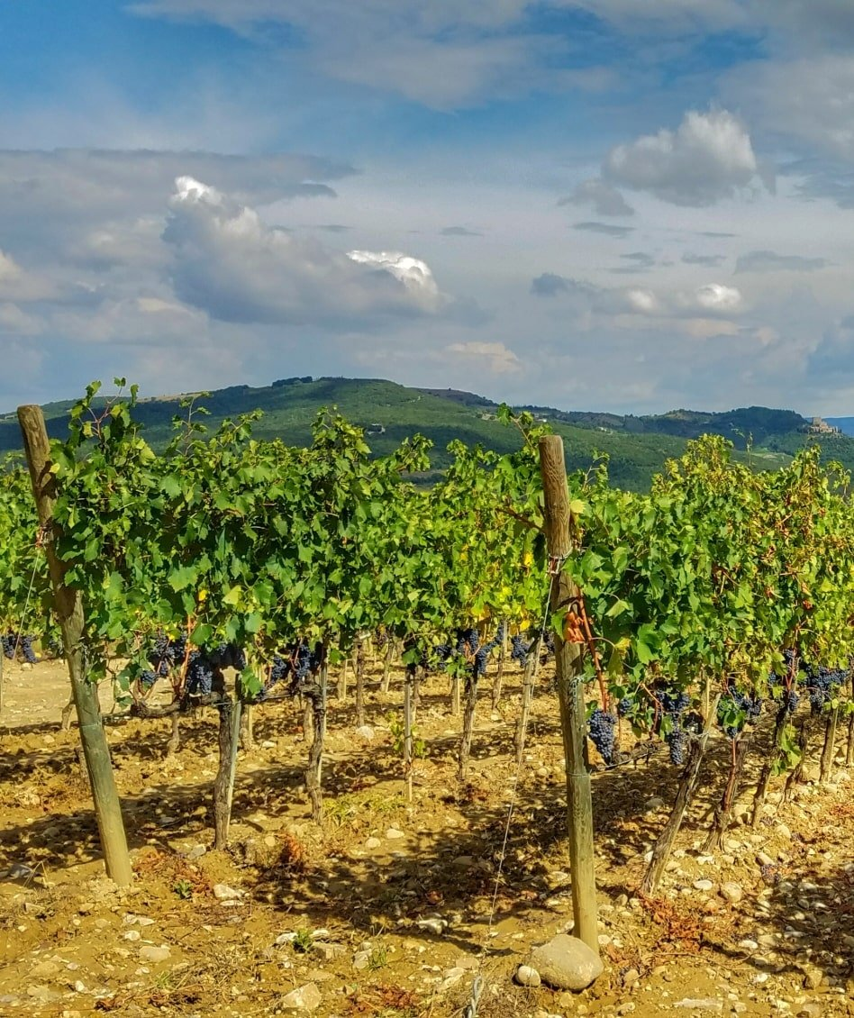 The Best Wine Regions in Italy