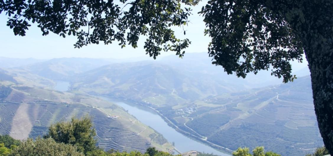 Full Day Trip to Douro Valley with Guide-driver