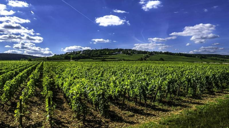 Full Day Private Trip to Medoc