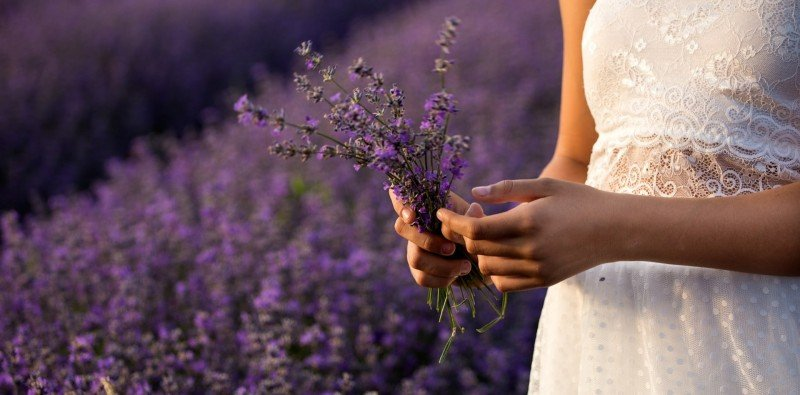 Full Day Group Tour to Lavender Fields and Sault