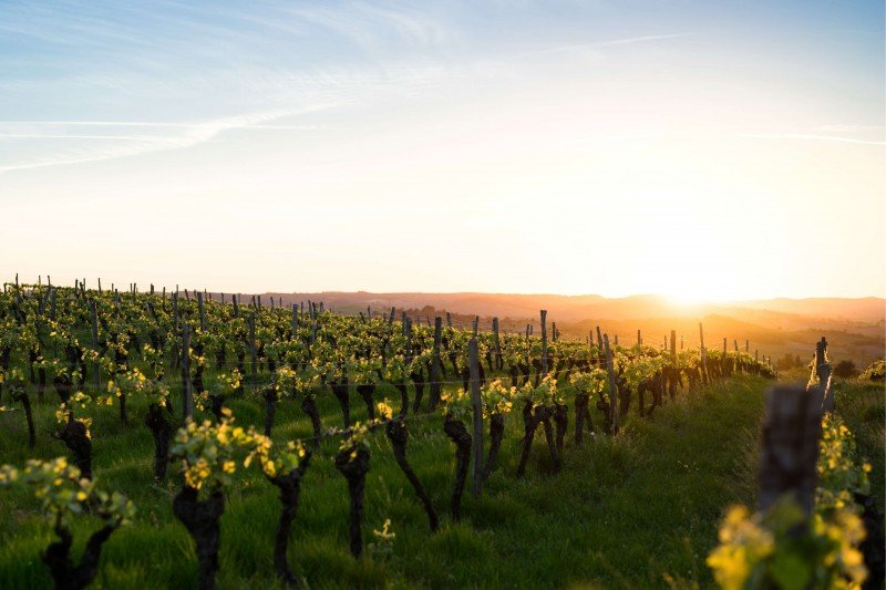 Full Day Private Trip to Champagne Region